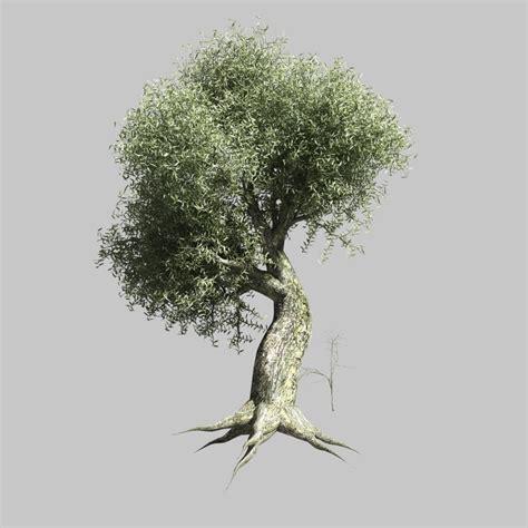 olive tree 3d model olive tree
