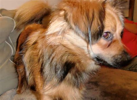 prodigy dog winston