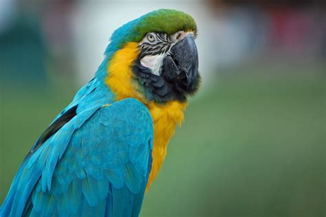 birds with colorful beaks wallpaper parrot colorful birds beak macaw