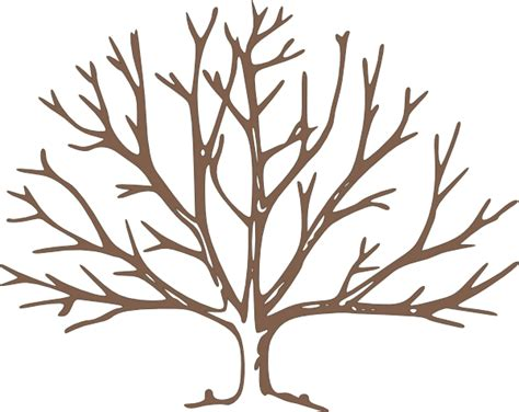 free coloring pages of a bare tree bare tree coloring page clipart panda free clipart images