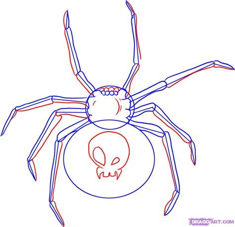 create drawings how to draw a black widow step by step bugs animals