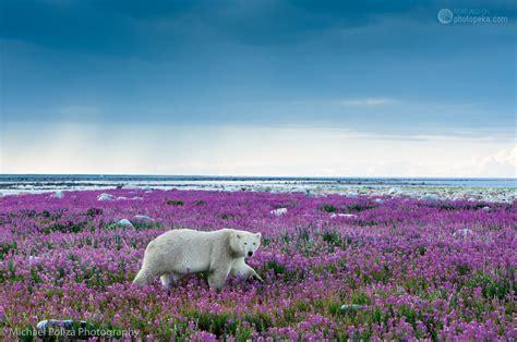 Holgen Purple in purple photopeka