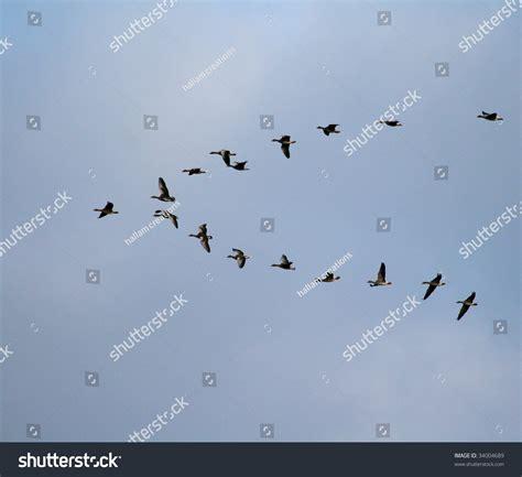 flight pattern video bird flight pattern stock photo 34004689 shutterstock