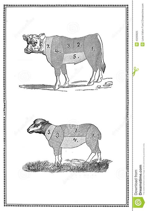 Old pork and lamb chart stock illustration. Illustration