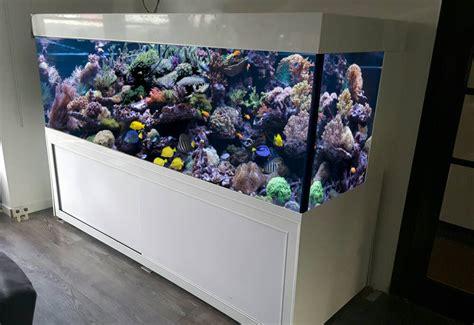 design zeeaquarium limburg nl hoogglans wit design zeeaquarium