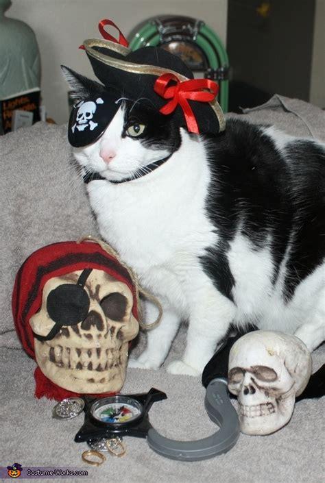 pirate cat halloween costume diy costumes