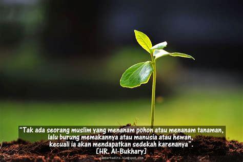 hadits hikmah menanam pohon gambar hadits