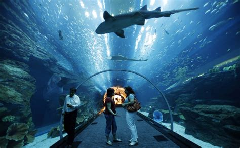 Atlantis the Palm Wiki   Memphis Tours Duabi