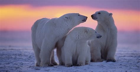 the polar adventures of a rich american dame a of louise arner boyd books tundra lodge accommodation photo expeditions