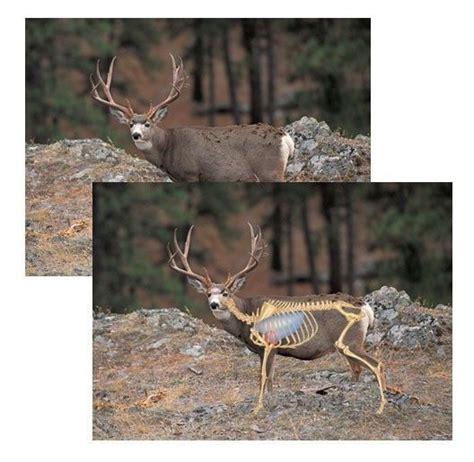 360 best target images on pinterest deer hunting gun 278 best hunting and fishing images on pinterest hunting