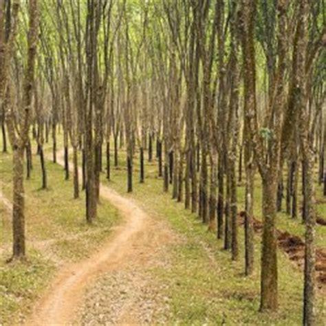 Alas Foto Ukuran Besar A2 15 alas karet polokarto sukoharjo hutan asri cocok untuk fotografi cv ixotransport
