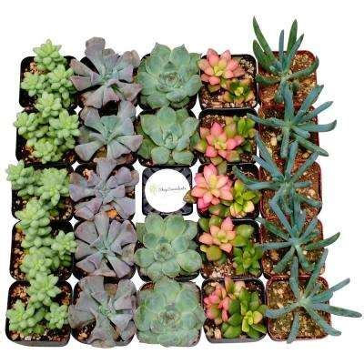 succulents cactus plants garden plants flowers the