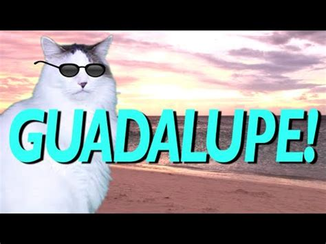 happy birthday guadalupe mp3 download happy birthday guadalupe epic cat happy birthday song