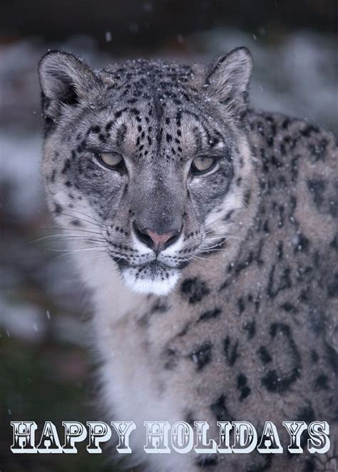 reset nvram snow leopard 17 best images about products cards books and calendars