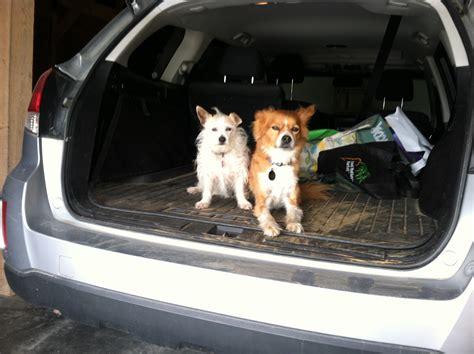 puppy car sickness canine car sickness spot speaks