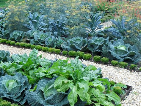 home vegetable garden pictures landscape contemporary with