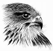 Falcon Image Drawing  Images