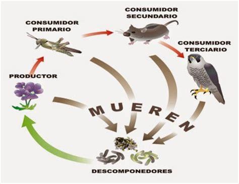 cadenas para quimicos la ecologia y el ambiente factores bi 243 ticos y abi 243 ticos
