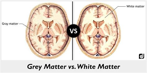 grey matter difference between grey and white matter