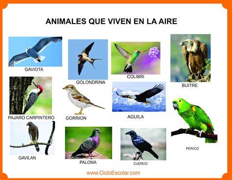 imagenes de animales que viven en el mar animales que viven en el bosque selva mar r 237 os