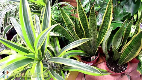 house plants indoor at home depot