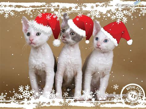 imagenes graciosas de animales en navidad novogodišnje desktop pozadine za vaš računar