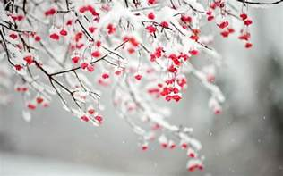 quotes about winter flowers quotesgram