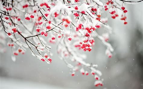 Winter Flowers | quotes about winter flowers quotesgram
