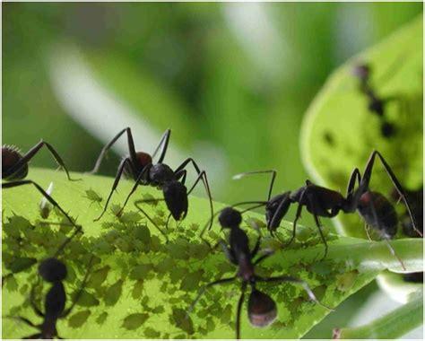 imagenes increibles de otoño 10 ejemplos incre 237 bles de mutualismo animal