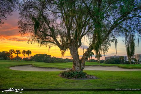 golf tree golfing product categories royal stock photo