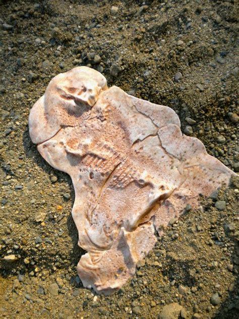 Who Find Dinosaur Bones Find Dinosaur Fossils Driverlayer Search Engine