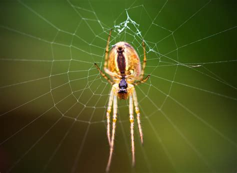 spider with yellow pattern on back uk uk spider identification 17 common british spiders you