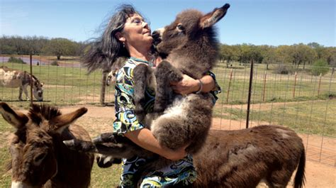miracle of the century a baby donkey comes out of womb alternative livestock miniature mediterranean donkeys