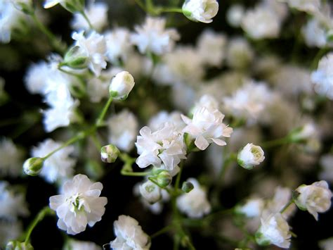 fiore velo da sposa archive fiori8