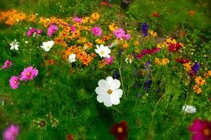 Flowers Garden Pictures Garden Flowers Flowers Wallpapers