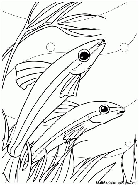 jumping fish coloring pages jumping fish coloring pages coloring home