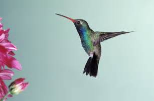 did you know and what you know humming bird