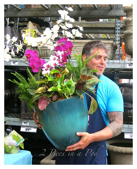southern living plant collection and home depot 2
