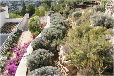 plantas para jardin mediterraneo m 225 s de 1000 im 225 genes sobre plantas especies