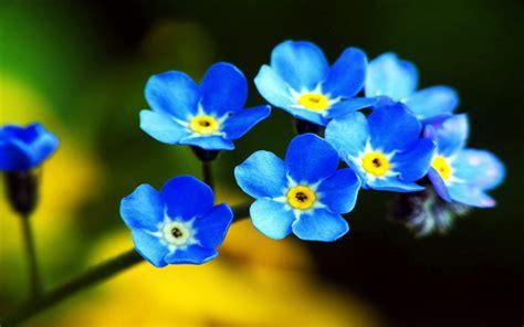 s fiore nature in your mind fiori ed altre piante in un