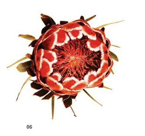 7 8 Print Wajik Vierra vt interiors library of inspirational images botanical