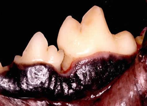 gum disease in dogs atp patient history