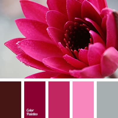 color cherry cherry color color palette ideas