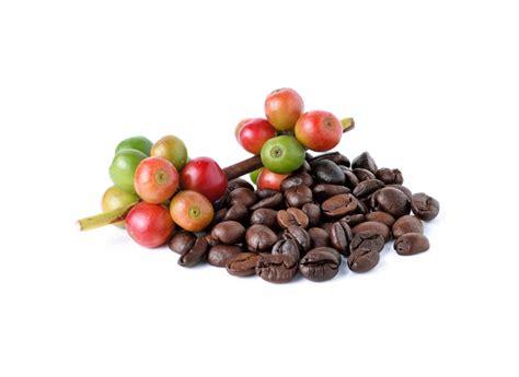 Papua Wamena Washed tren kopi di indonesia dari kopi jitu hingga spesialiti kopi yang populer