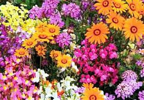 top 10 most popular flowers flowers gardening top 10 annuals for your garden mama knows