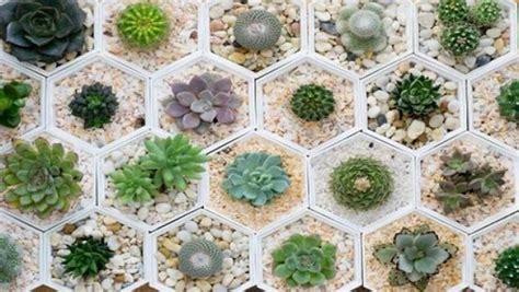 vaso per piante grasse cura delle piante grasse in casa