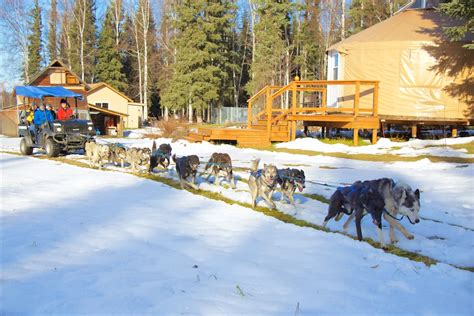 fairbanks sledding alaska sled tours mushing yurt b b just of magic