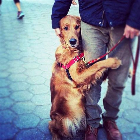 louboutin golden retriever beloved hugging left homeless after erupts in nyc ny daily