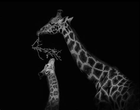 imagenes artisticas hd fotografias blanco y negro artisticas hd buscar con