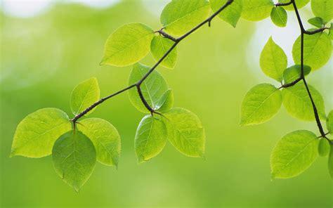imagenes de hojas otoñales fondos de hojas fondos de pantalla